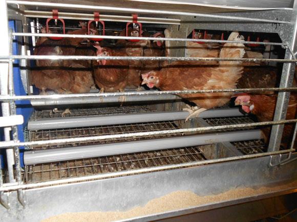 Fotoensayo jaulas de colonia el sitio avicola - Perchas ahorra espacio ...