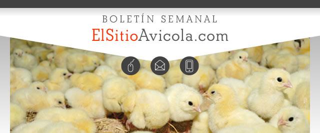 ElsitioAvicola