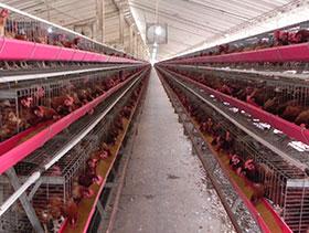 bioseguridad en la granja avicola,chris wright,elsitioavicola